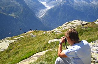 Observation de chocards à bec jaune © CREA Mont-Blanc