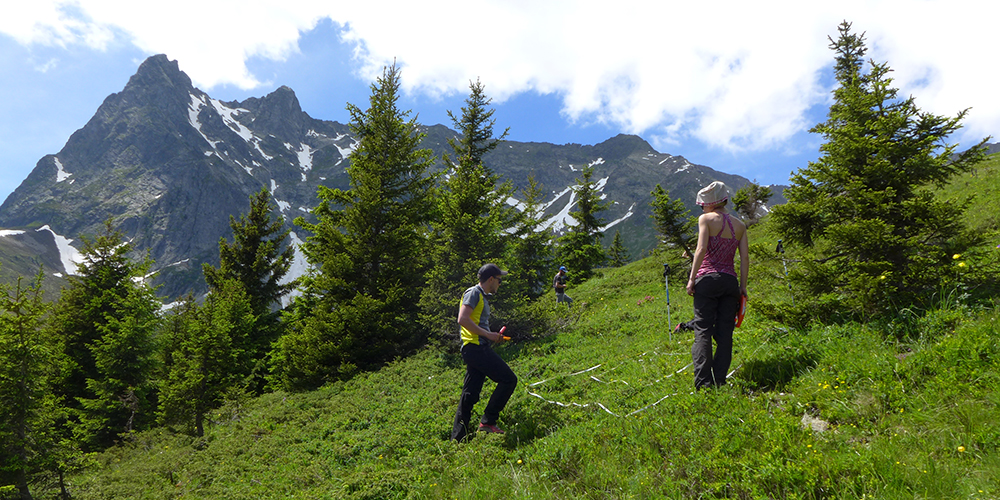 Détermination d'une placette ORCHAMP à Loriaz à 1900 m d'altitude © CREA Mont-Blanc